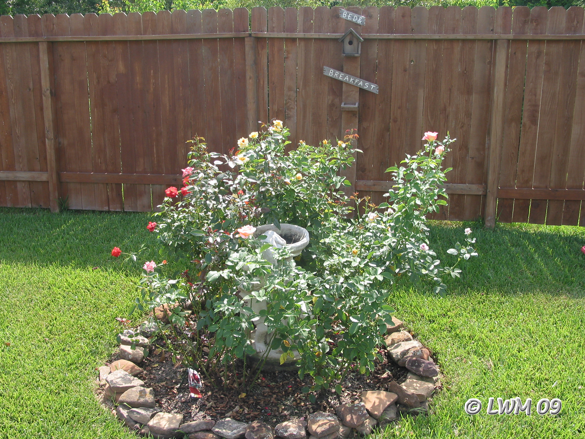 Backyard rose garden - Original Rose Garden