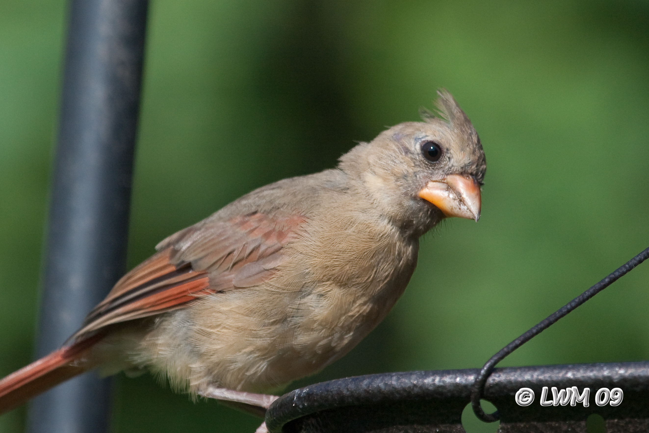 Amazoncom  BEST WINDOW BIRD FEEDER with Strong Suction